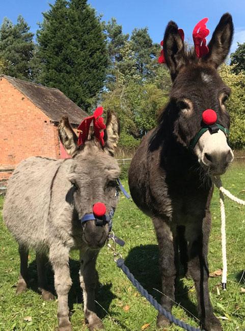 Donkey Sanctuary & Dog Rescue Shropshire | Severn Valley Rescue